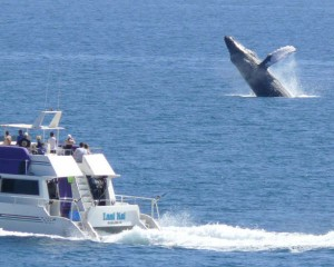 Lani Kai and jumping Whale